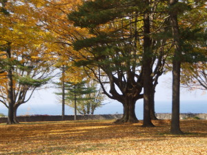 Fall photo of Krull Park and Lake Ontario